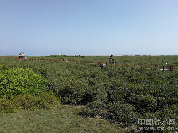 红树林生态保护区。经济日报-中国经济网记者 宋雅静/摄