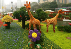 HK to hold 2014 flower show at Victoria Park