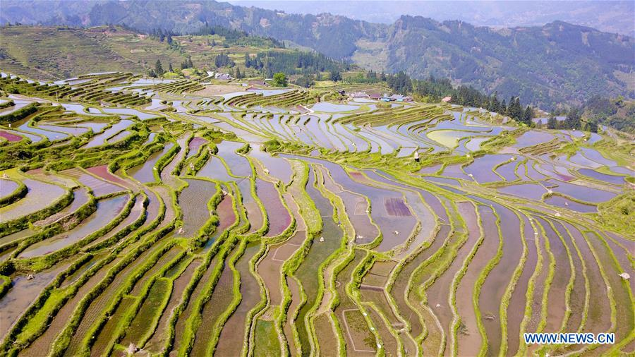 #CHINA-CONGJIANG-TERRACED FIELDS-WORKING(CN)