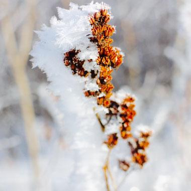 冬季爱感冒 记住6招提高抵抗力
