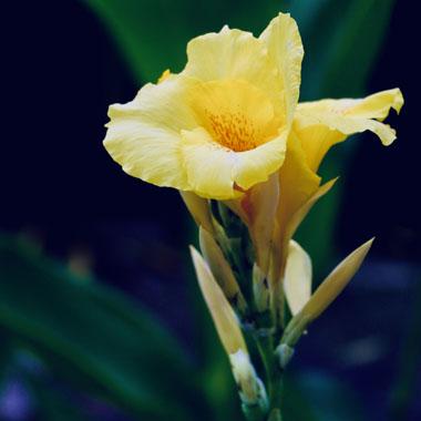 做好鲜花保养 轻松延长花期
