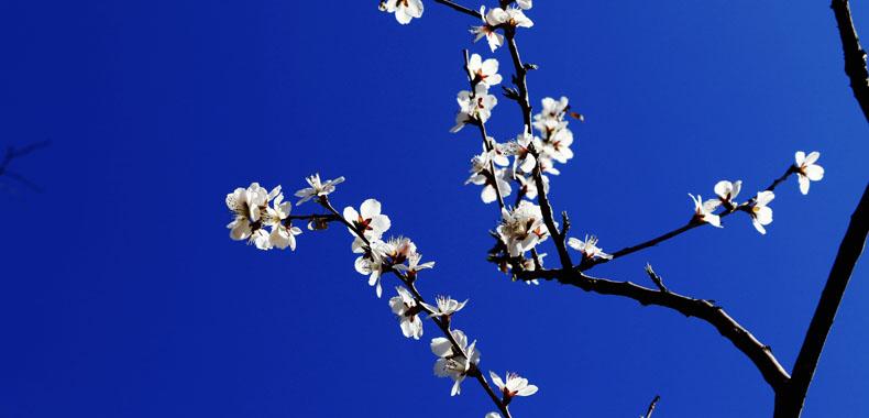 踏青赏花季 这些措施可有效预防花粉过敏
