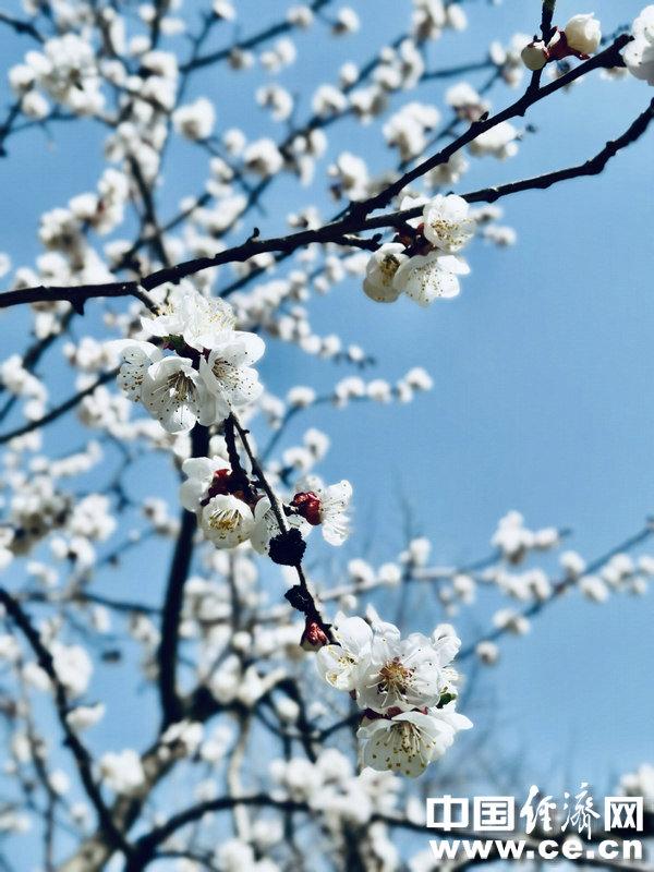 又到赏花季 过敏人群做好6个应对措施
