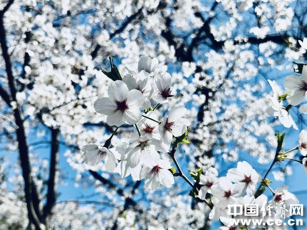 春季疾病多发 几个预防窍门请牢记