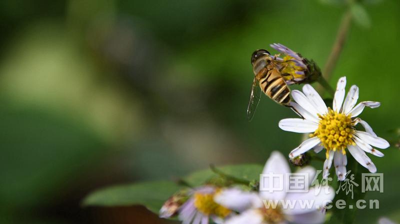 蜂类活跃期又要来了 小心被蜇伤