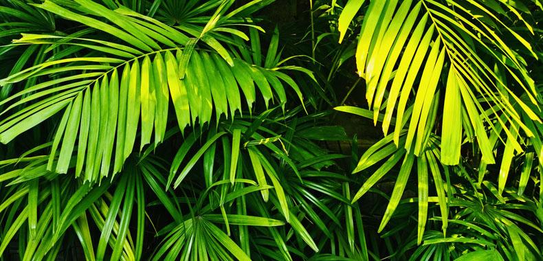 在室内种些绿色植物 对健康具有众多益处