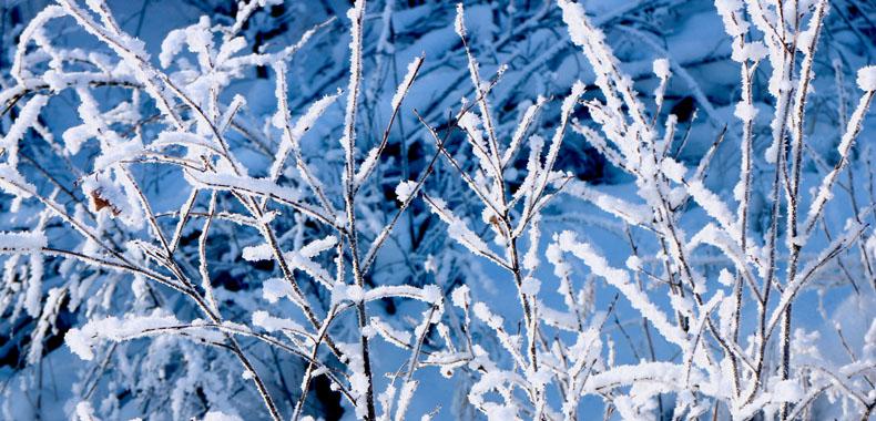 冬季爱感冒仅因为天冷?这些原因你可能不知道