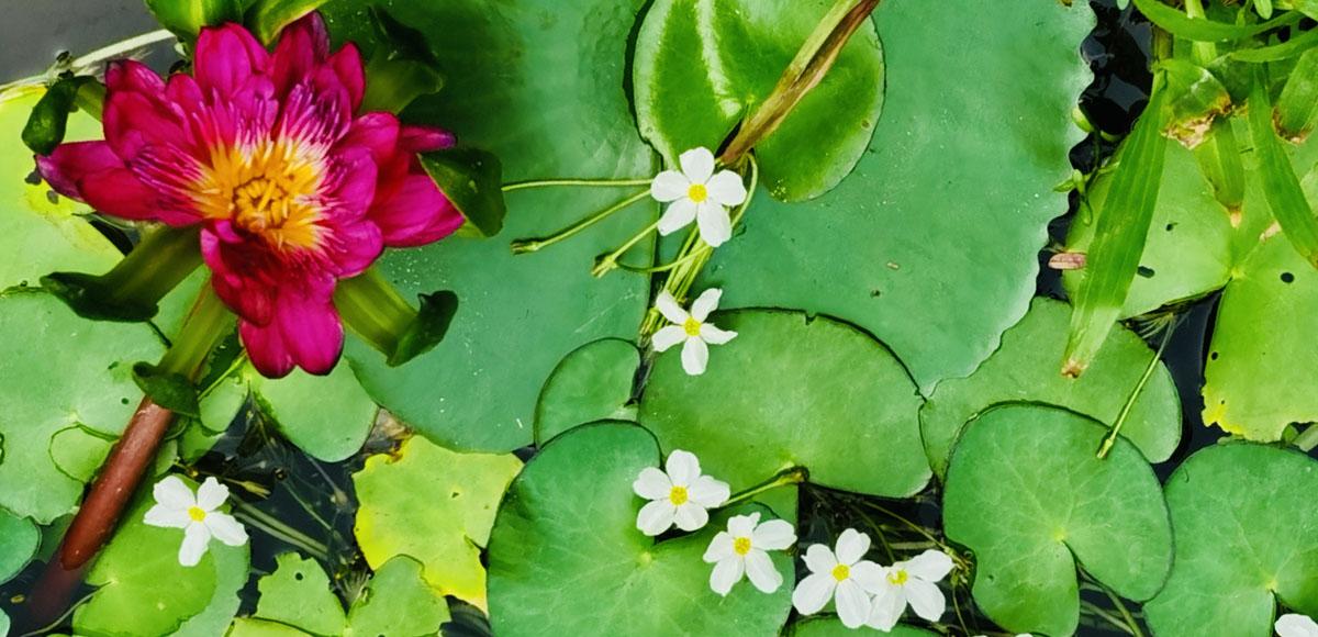 生活中需要这几种空气净化植物