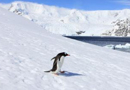 千名中国游客在南极过年