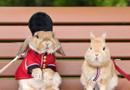 制服兔造型多变似型男