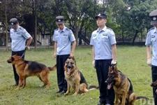 30只警犬承担搜爆任务