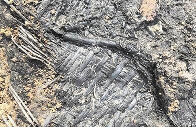 江苏人何时开始用席子? 6600年前!