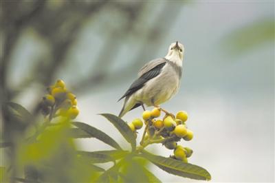 蓝天下爱鸟,不只在这一周