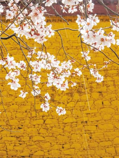 花粉、柳絮、小虫,关于春天的冷知识了解一下