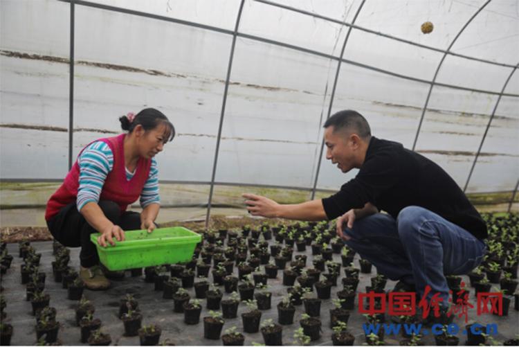 简阳市飞龙乡:花盆里的致富经