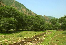 造林会战绿染山川 今年再增绿50万亩